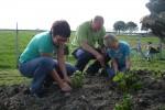 open tuin planten van aardbeien